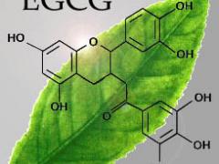 EGCG - Green Tea